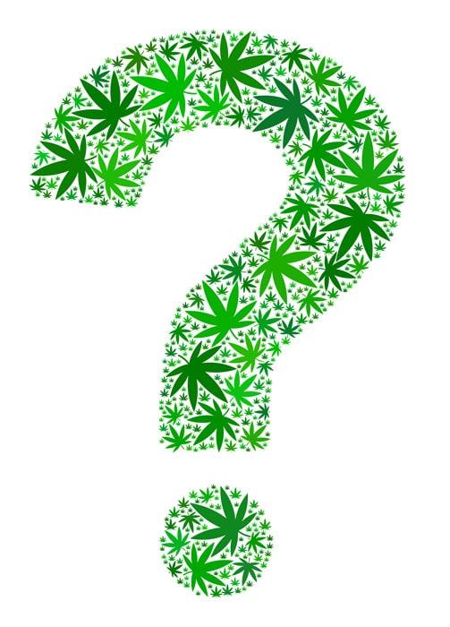 cannabis question mark