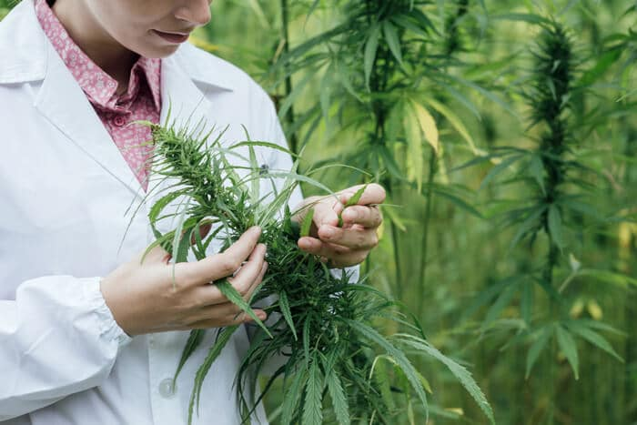 Medicinal cannabis products approved for epilepsy